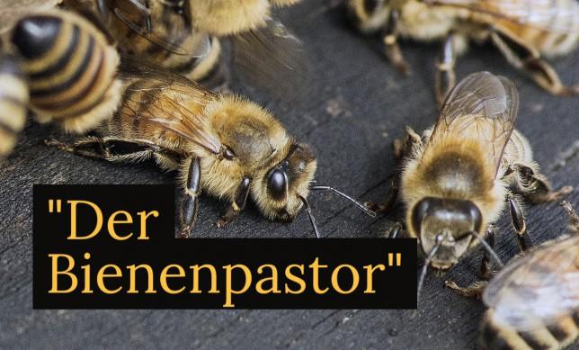 Bienenpastor